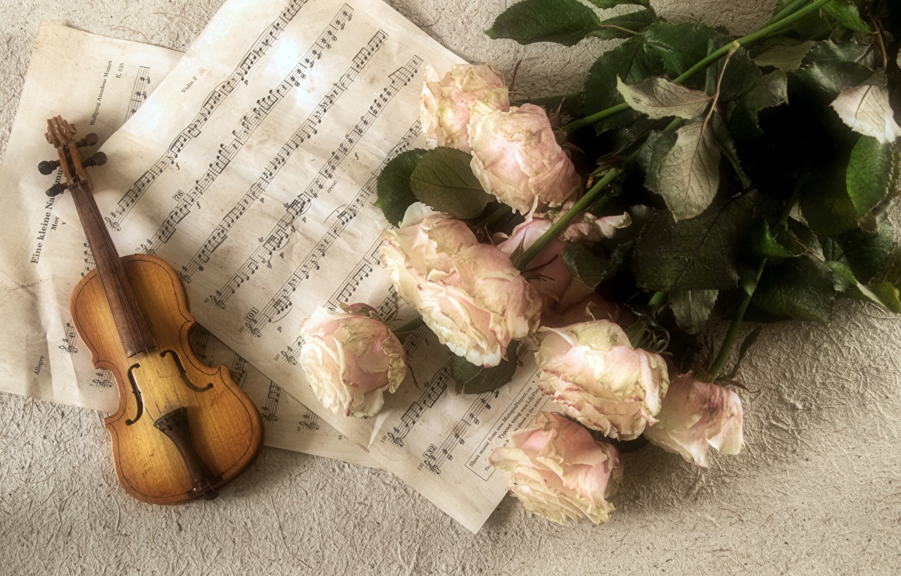 Picture Violin Notes bouquet Roses Flowers Musical Instruments Bouquets rose flower