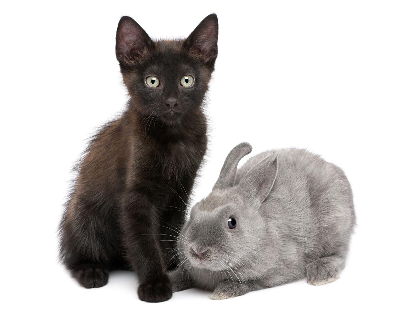 Desktop Wallpapers cat Rabbits Two animal Cats rabbit 2 Animals