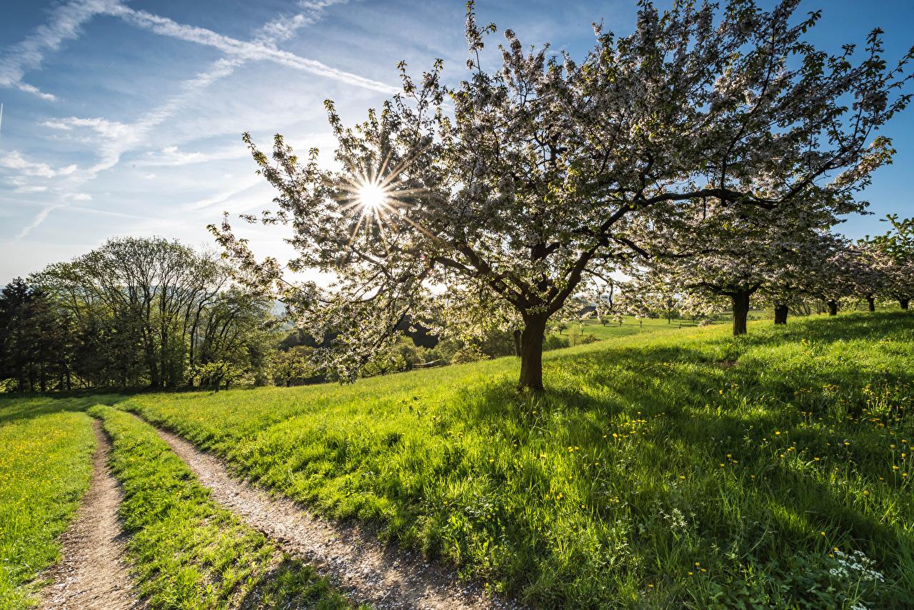 Fotos Lichtstrahl Natur Frühling Wege Gras Blühende Bäume Straße