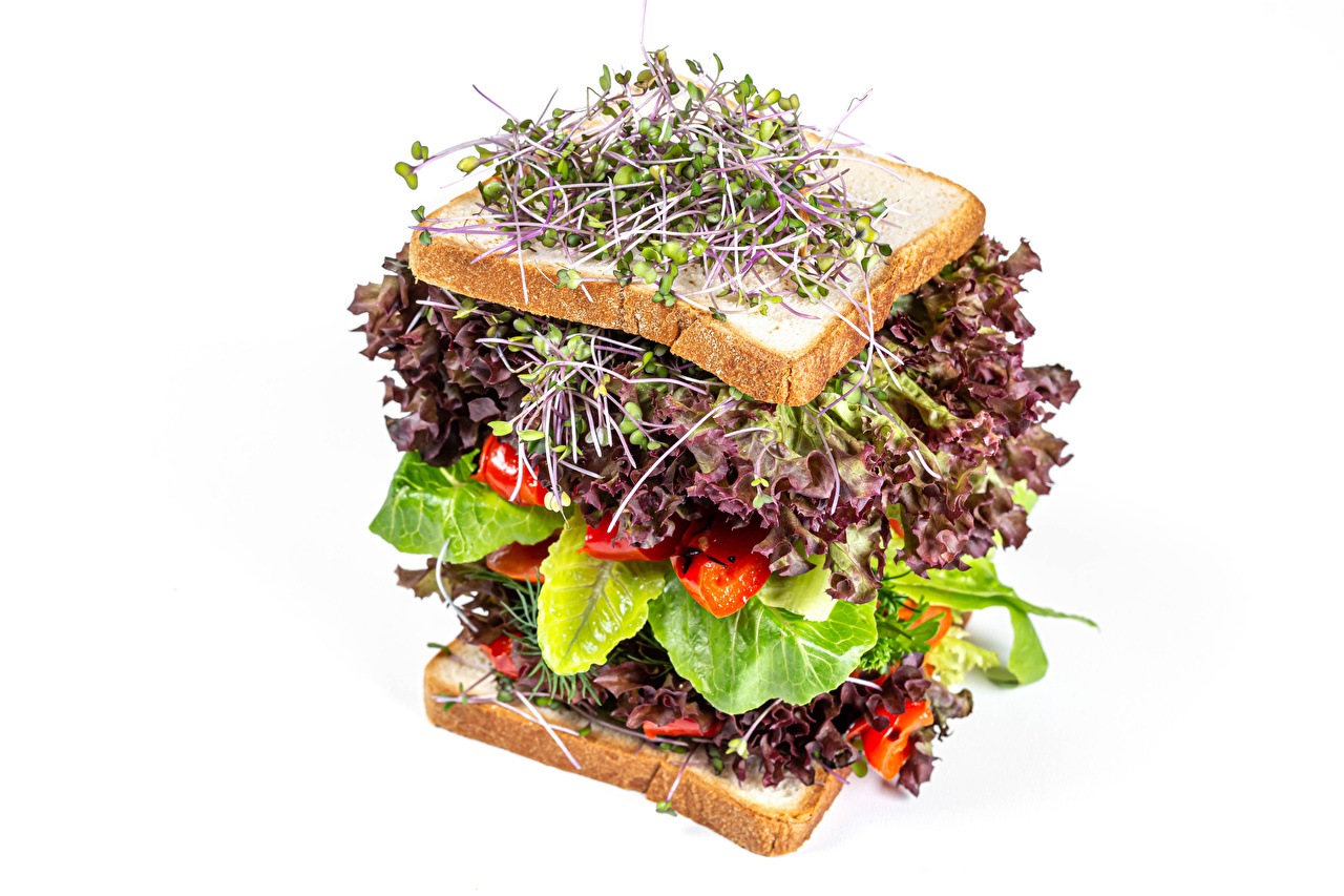 Images microgreen Sandwich Bread Food Vegetables White background