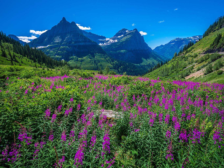 Fotos von Washington Vereinigte Staaten Glacier National Park Natur Gebirge Parks USA Berg