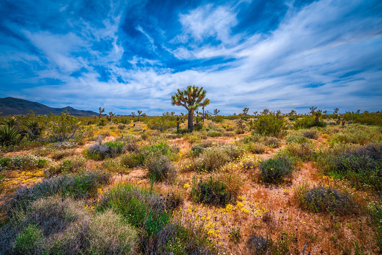 Desktop Hintergrundbilder Kalifornien Vereinigte Staaten Joshua Tree National Park Natur Parks Bäume USA