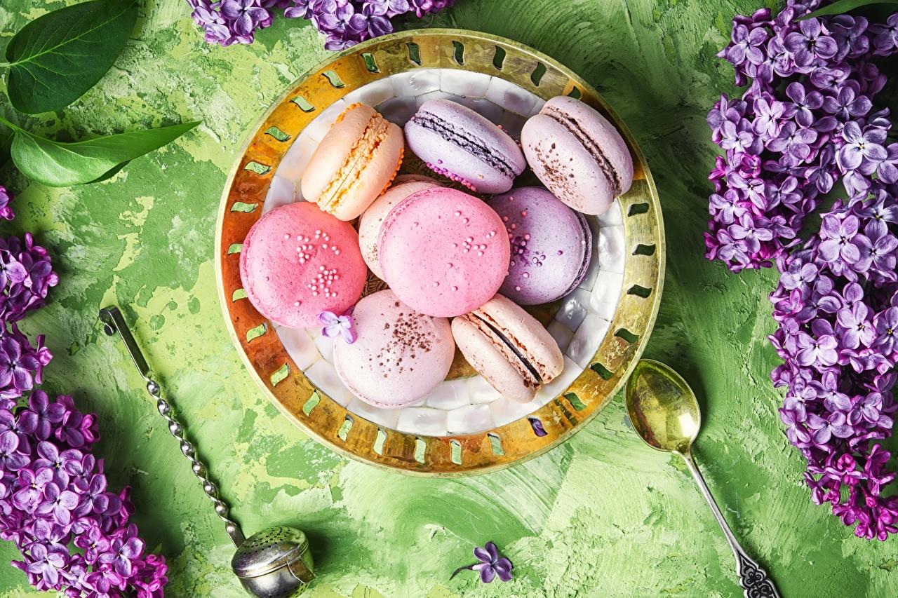Bilder von Macaron Kekse Teller Lebensmittel macarons das Essen