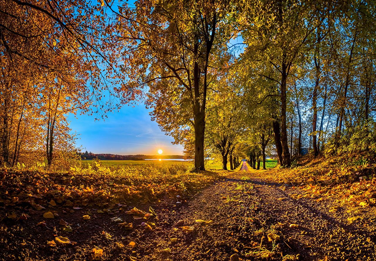 Foto Foglie Natura Autunno Il Sole Strade Alberi Stagione Foglia