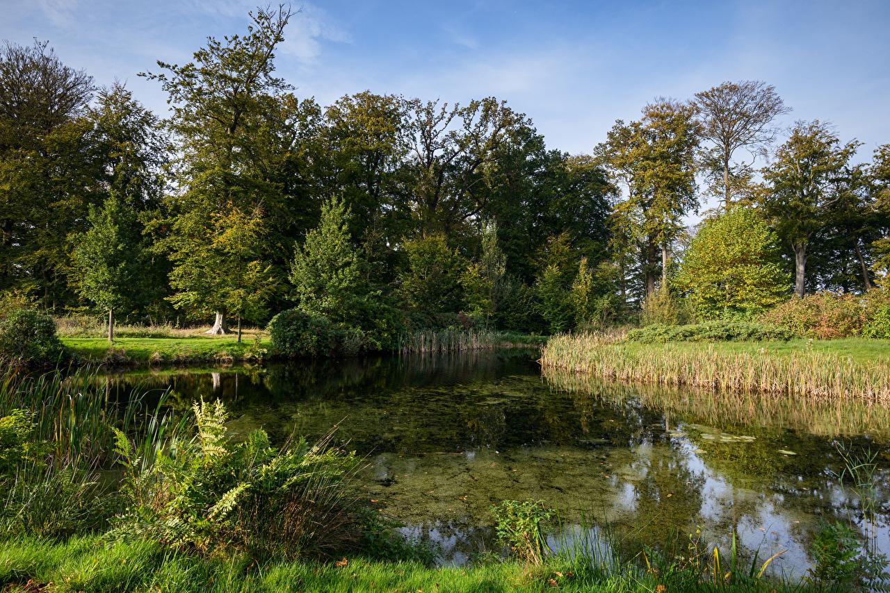、オランダ、池、s' Graaveland、木、自然
