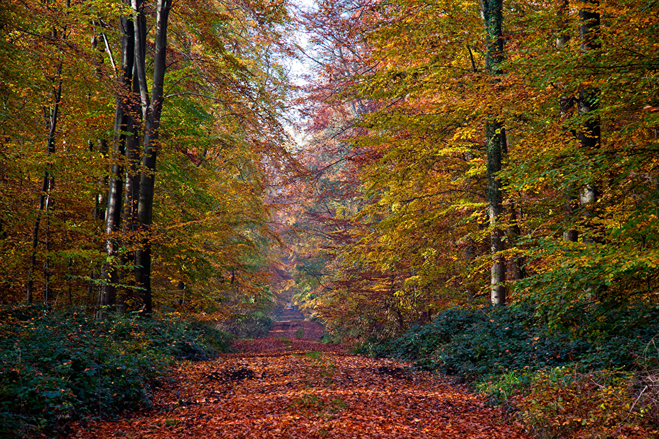 Foto Foglia Natura Autunno Sentiero foresta Alberi Stagione Foglie Foreste