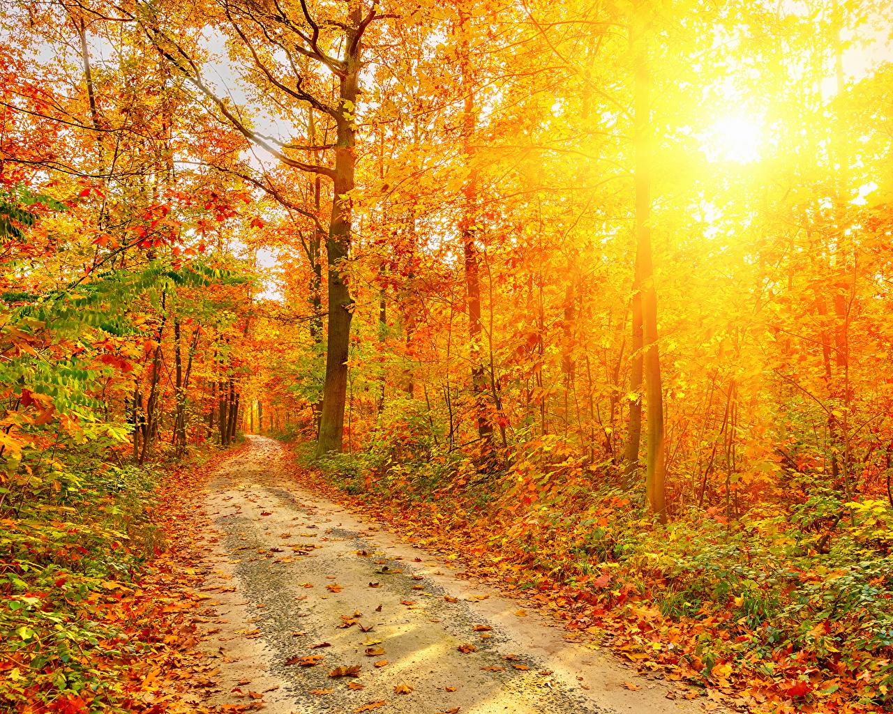 壁紙 秋 道 森林 木 光線 木の葉 自然 ダウンロード 写真