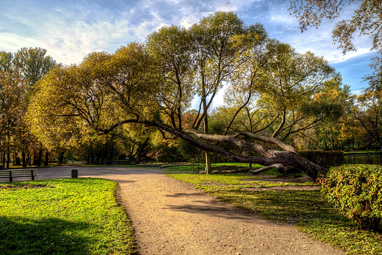 Image St. Petersburg Russia Park Ekaterinhof Nature Autumn Parks Trees