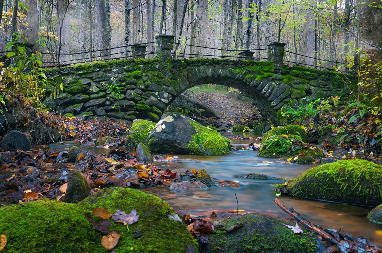Photo Foliage brook bridge Autumn Nature Moss stone Leaf Creek Creeks Stream Bridges Streams Stones
