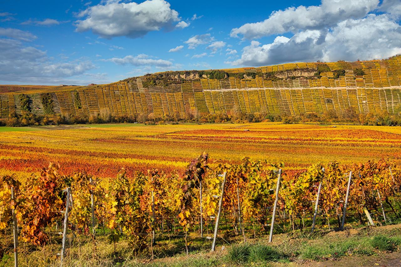 Desktop Hintergrundbilder Deutschland Baden-Wuerttemberg Rebberg Natur Herbst Acker Hügel Strauch Weinberg Felder