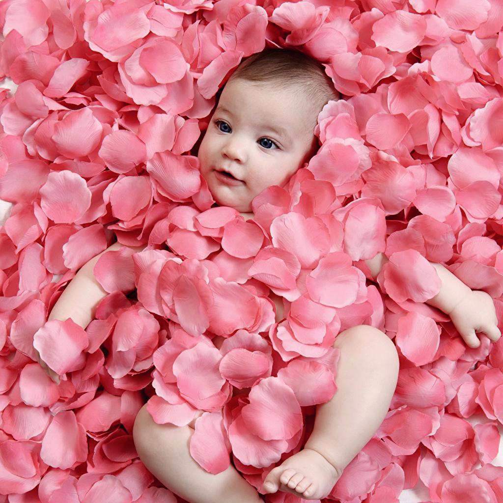 壁紙 赤ちゃん 花びら ピンク 子供 ダウンロード 写真