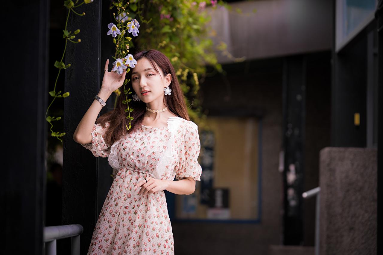 Bilder von Mädchens asiatisches Hand Starren Kleid junge frau junge Frauen Asiaten Asiatische Blick
