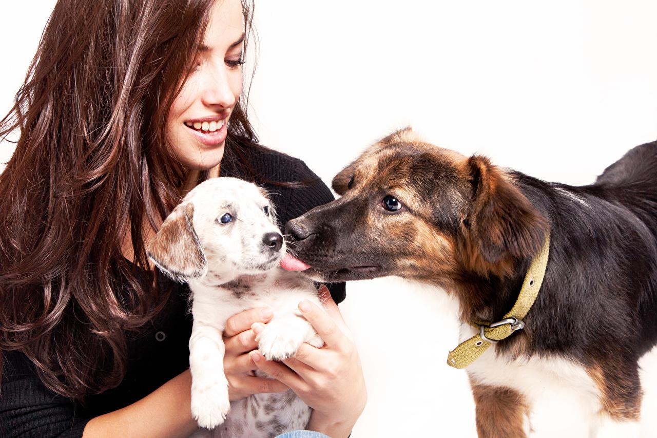 Desktop Hintergrundbilder welpen Hunde Braune Haare Lächeln 2 junge frau Tiere Weißer hintergrund Welpe hund Braunhaarige Zwei Mädchens junge Frauen ein Tier