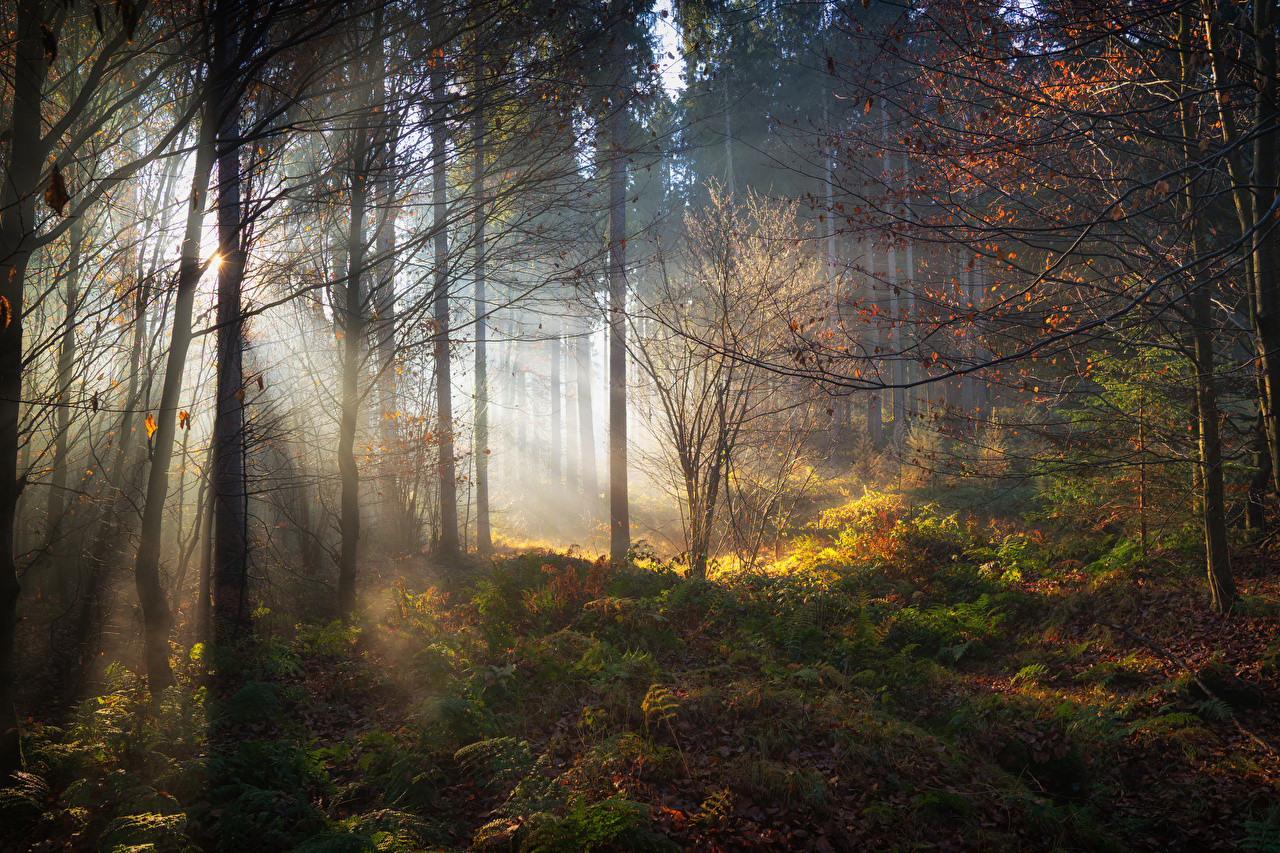 Alemanha Florestas Baviera árvores Raios de luz floresta Naturaleza