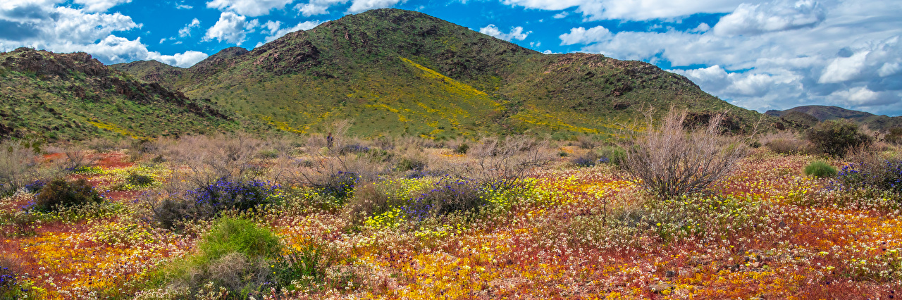 Desktop Hintergrundbilder Kalifornien USA Panoramafotografie Joshua Tree National Park Berg Natur Frühling Wolke Vereinigte Staaten Panorama Gebirge Parks