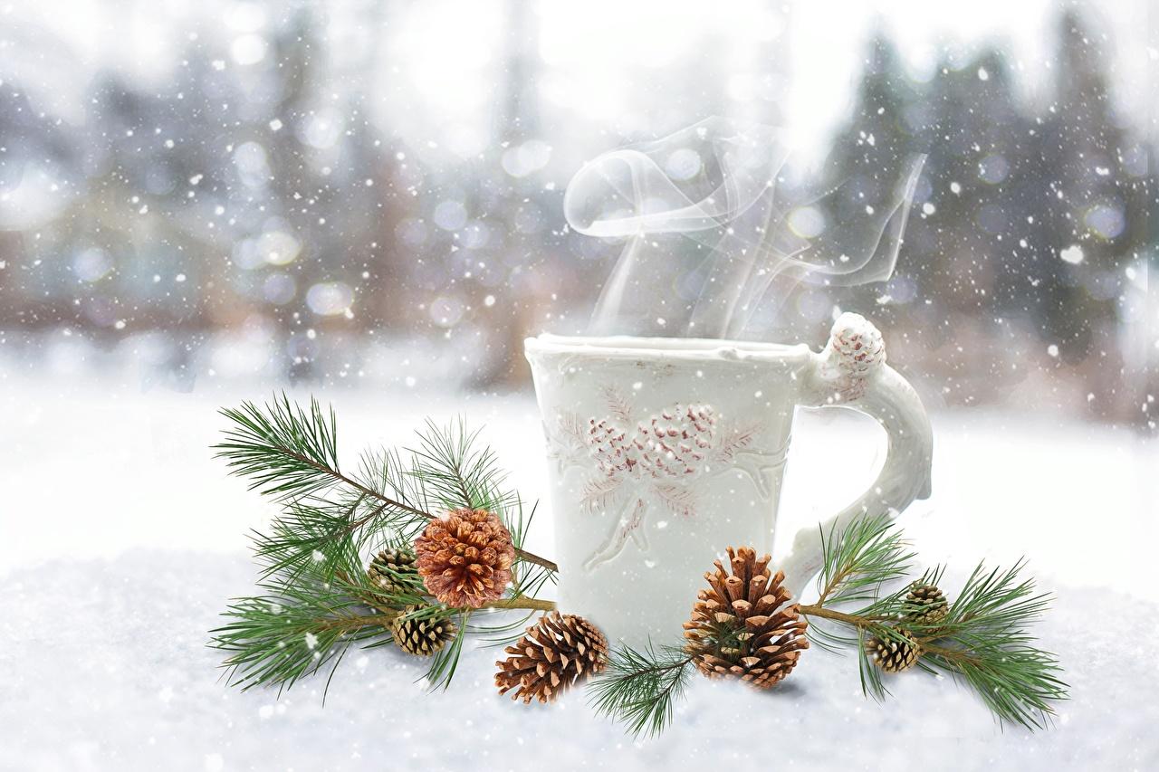 Wallpapers Winter Snow Mug Vapor Branches Conifer cone Pine cone