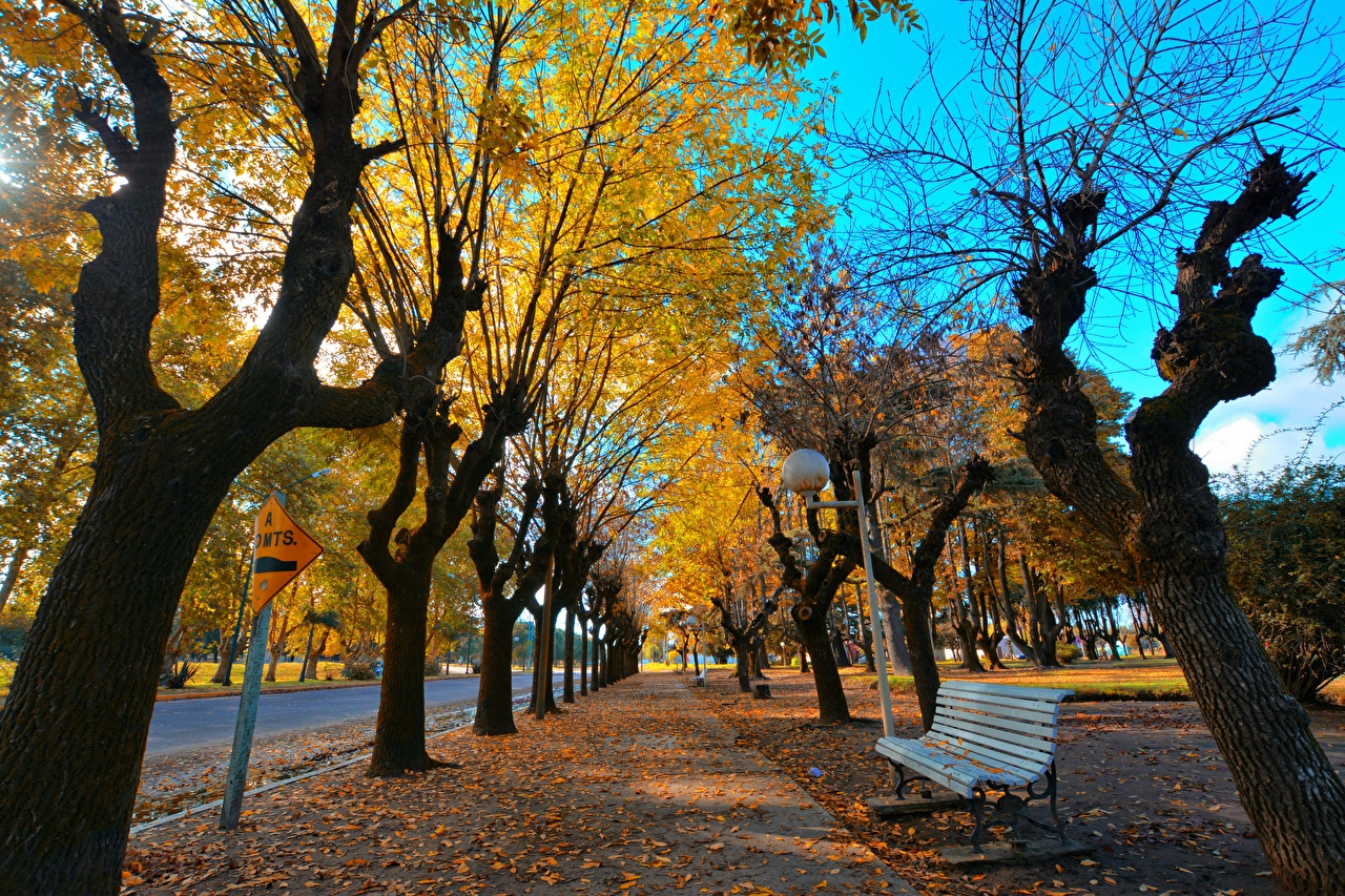 Photos Leaf Allee Autumn Bench Street lights Trees Cities Foliage Avenue