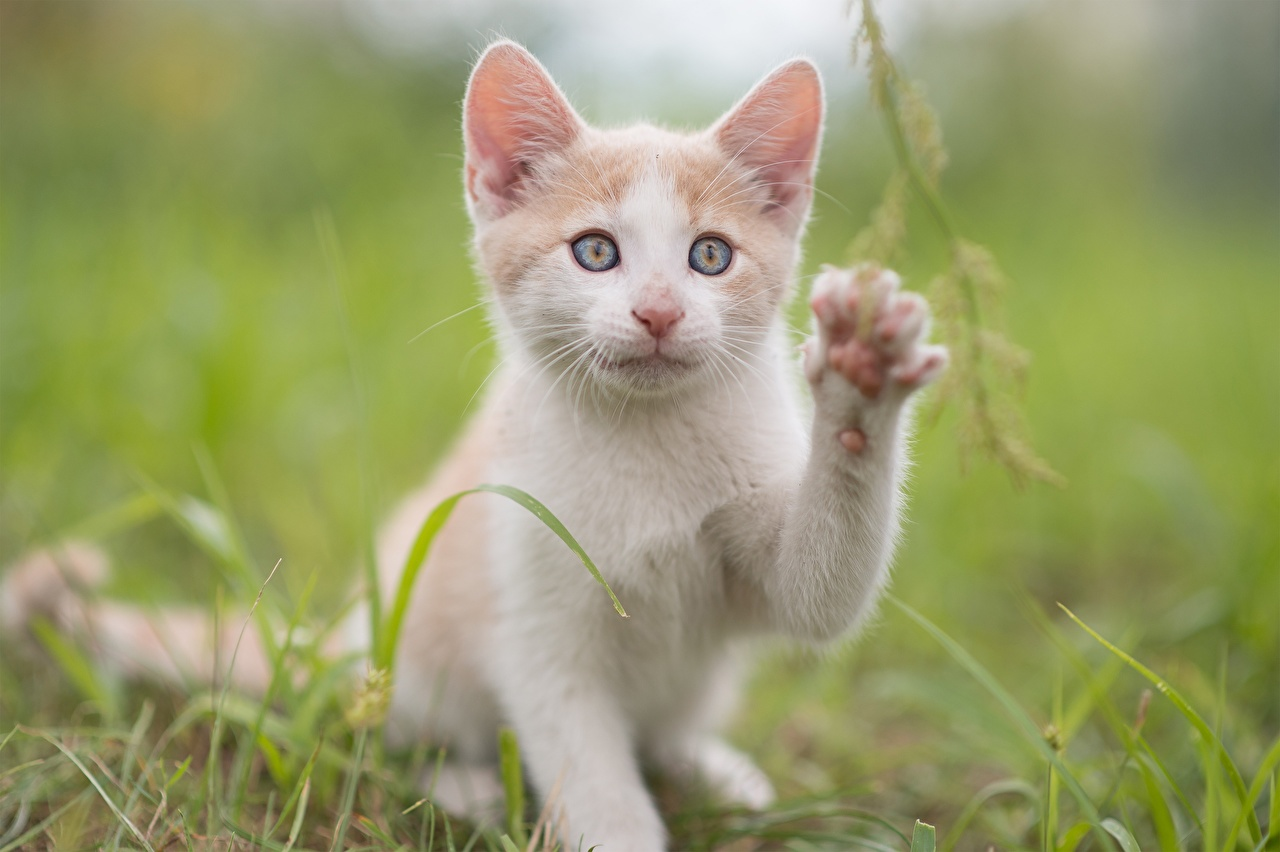 Images Kittens cat lovely Paws animal Glance