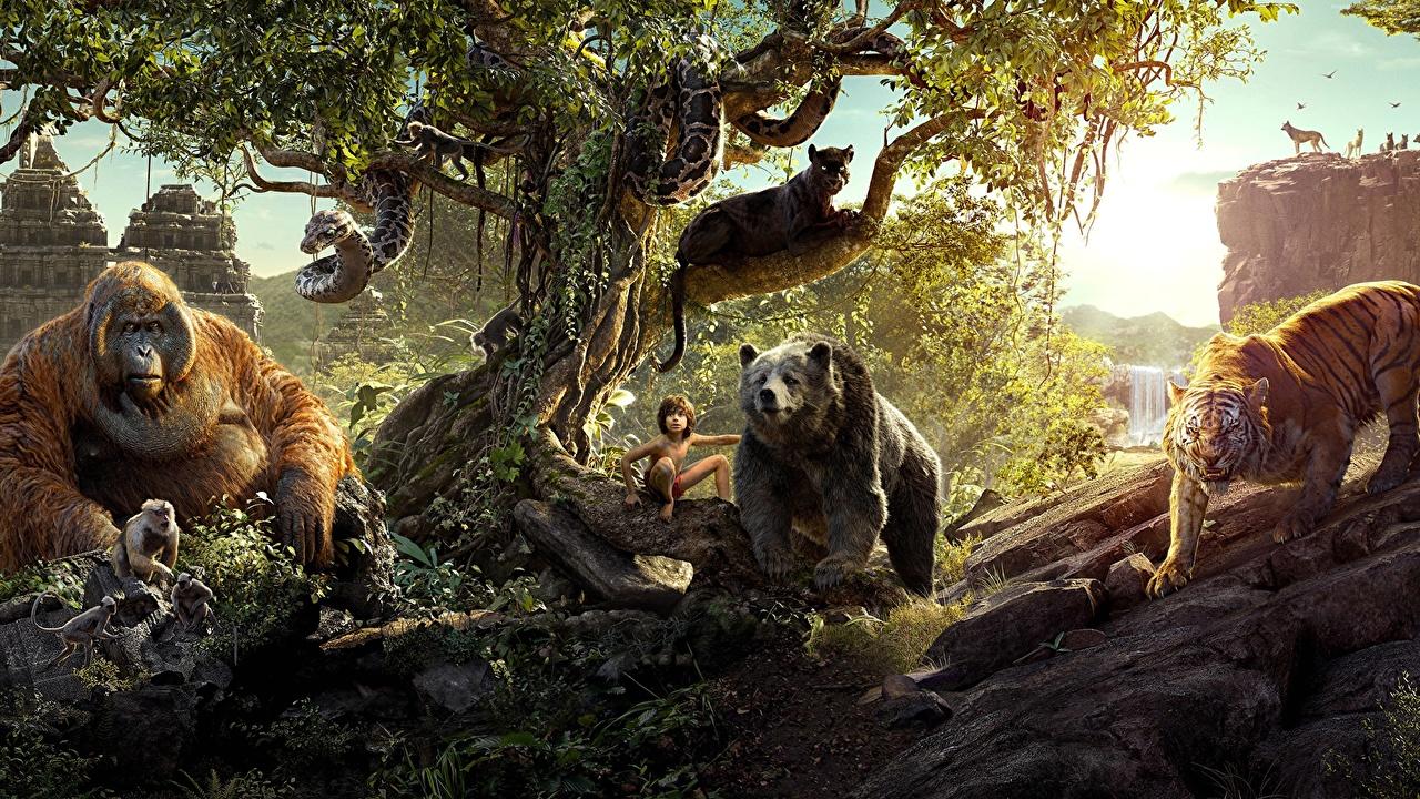Bilder Film Affen Tiger Schlangen Schwarzer Panther The Jungle Book 2016 Bären Junge