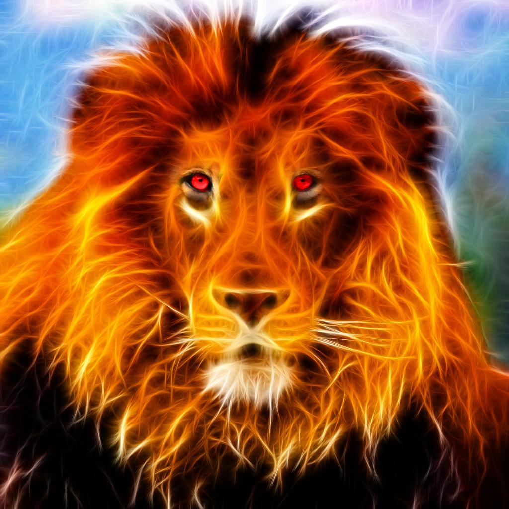 Fonds D Ecran Fauve Lions Feu Voir Tete Museau Animaux 3d Graphiques Telecharger Photo