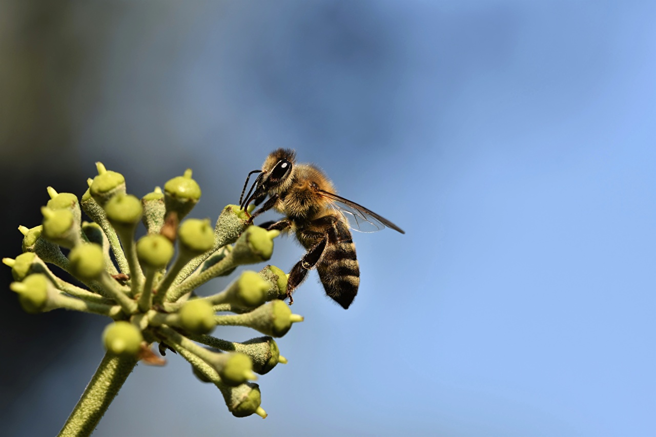 Photos Bees Insects Bokeh Closeup Animals blurred background animal