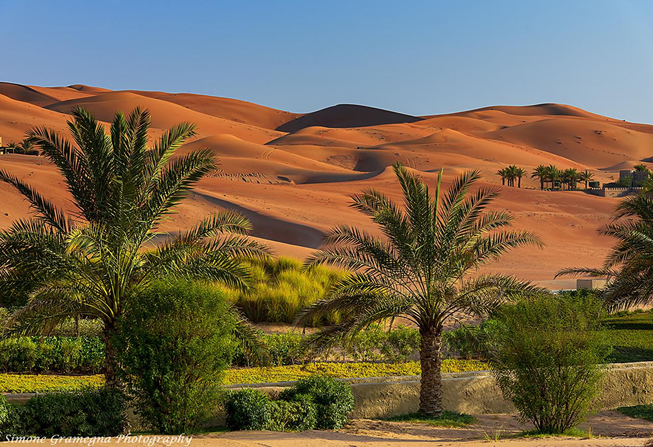Image Emirates UAE Abu Dhabi Desert Nature Hill Tropics palm trees Shrubs Palms Bush