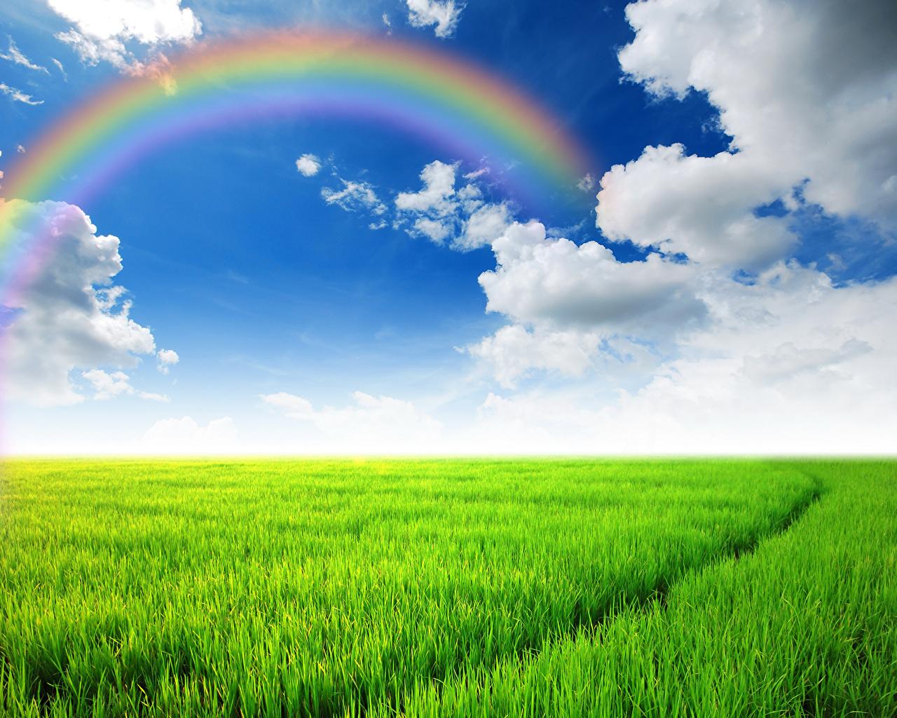 Картинка Радуга Природа Небо Поля Пейзаж Трава Облака