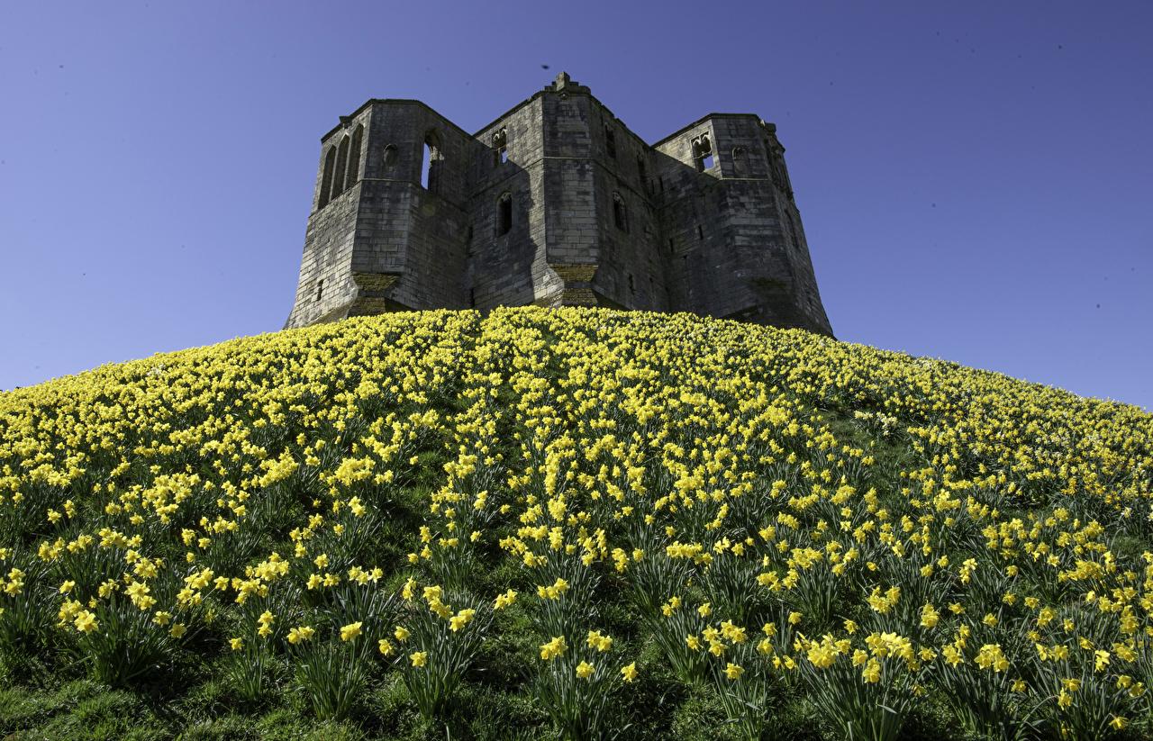 Bilder von England Warkworth Castle Burg Ruinen Hügel Narzissen Städte