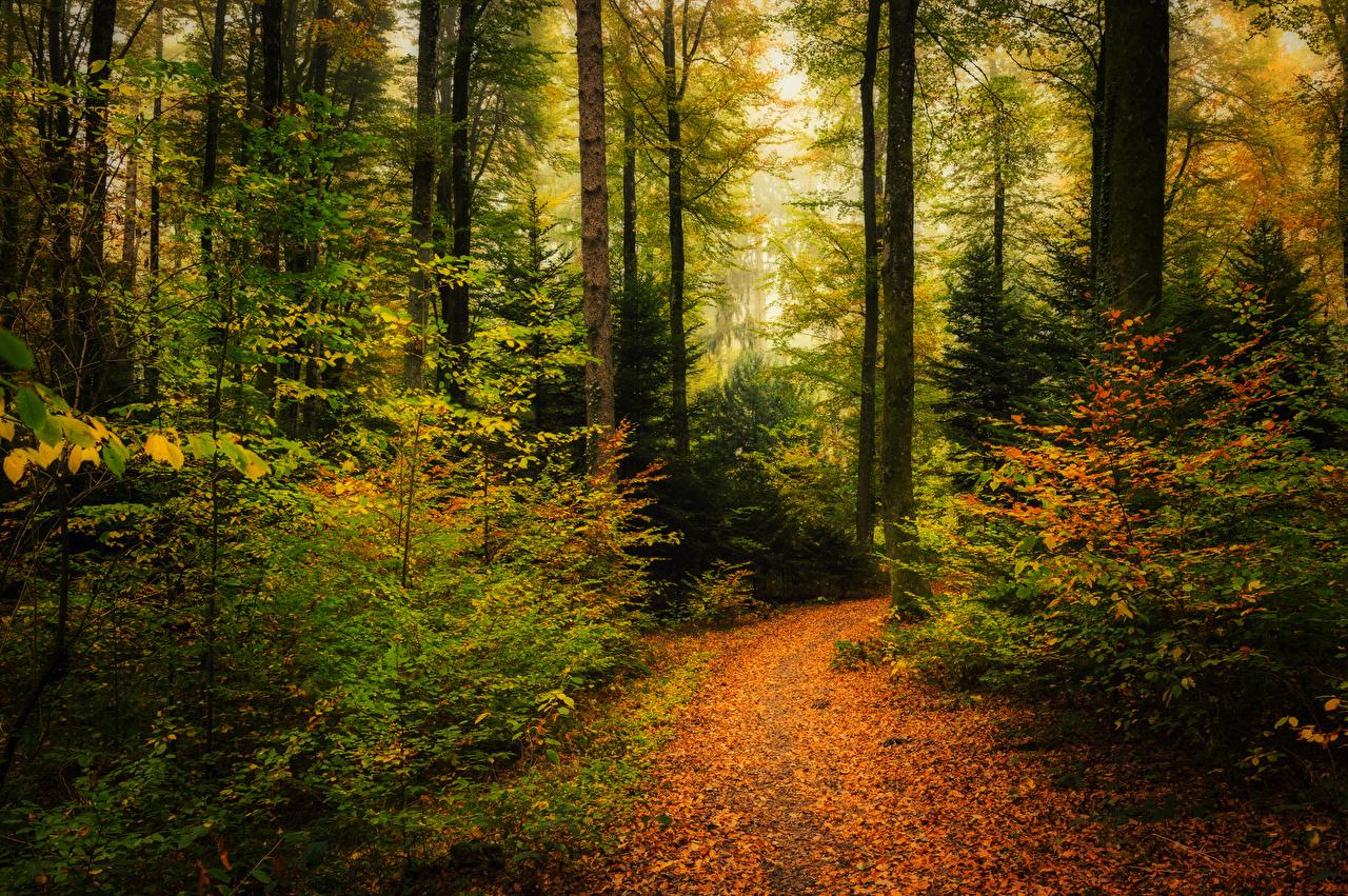 Photos Foliage Trail Nature Autumn Forests Trees Shrubs Leaf path forest Bush