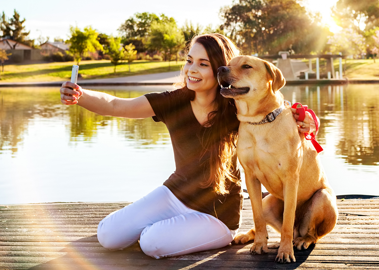 Wallpaper Labrador Retriever dog Brown haired Smile Selfie Smartphone female Sitting Animals Dogs smartphones Girls young woman sit animal