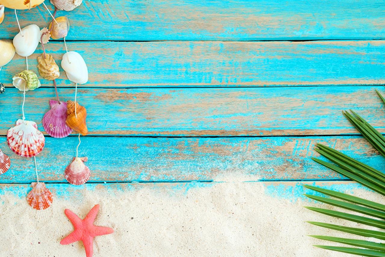 壁紙 貝殻 木の板 砂 ダウンロード 写真