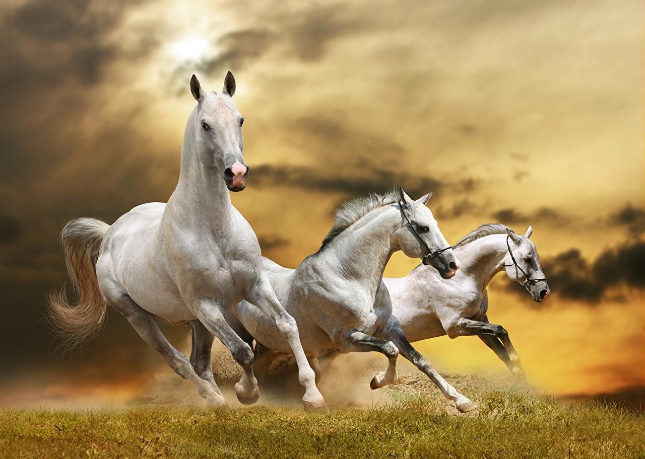 Fotos von Pferde Laufsport Gras ein Tier Pferd Hauspferd Lauf Laufen Tiere
