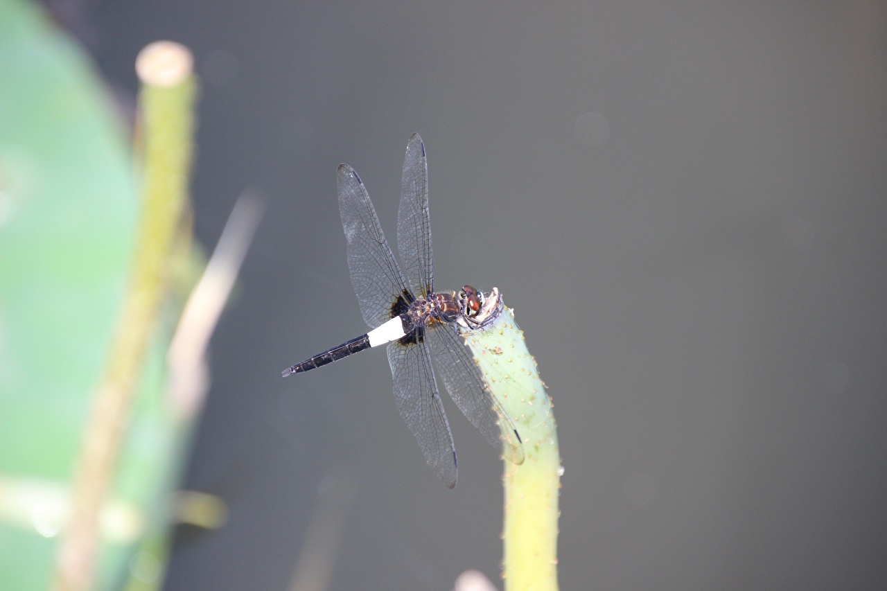 Picture Insects Dragonflies blurred background Closeup Animals odonata dragonfly Bokeh animal