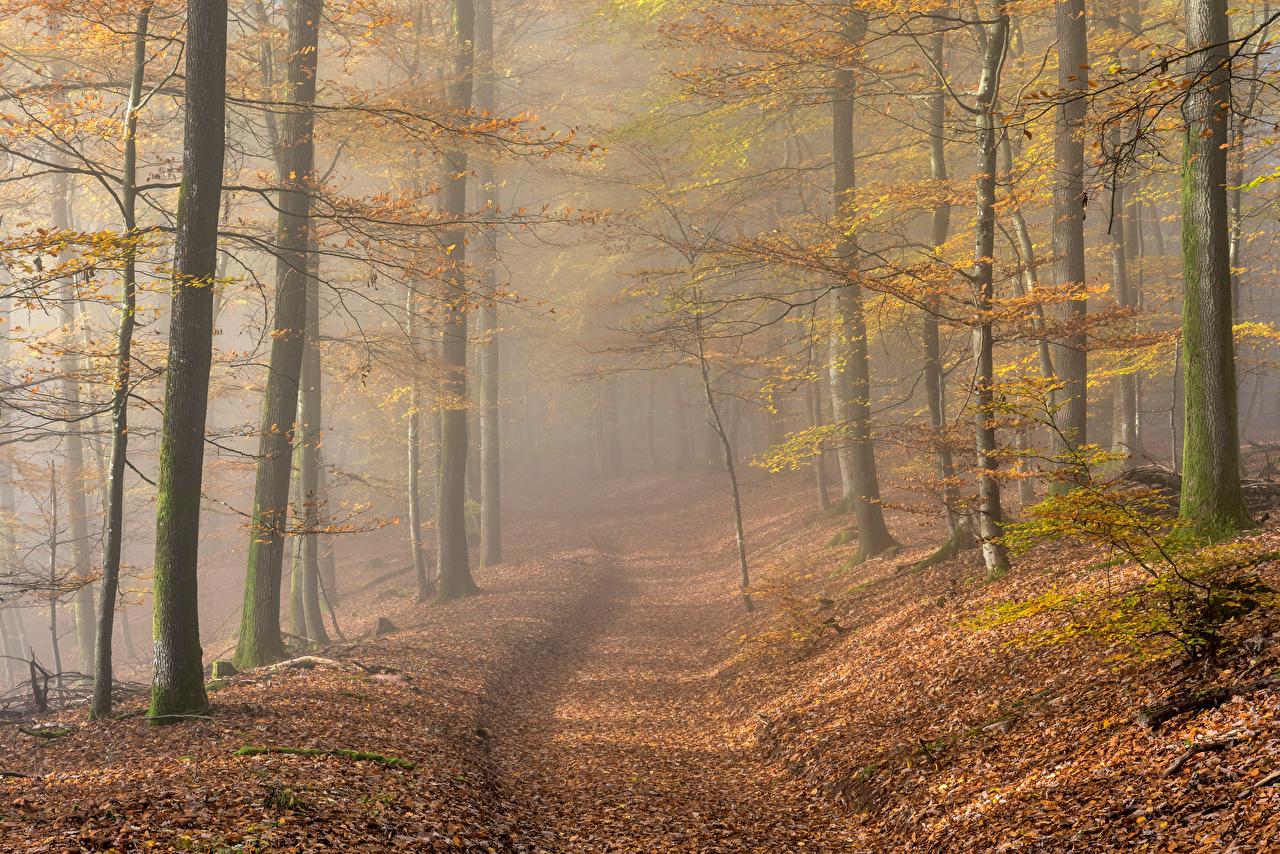 Wallpaper Leaf Germany Rheinland-Pfalz Fog Autumn Nature forest Morning Foliage Forests