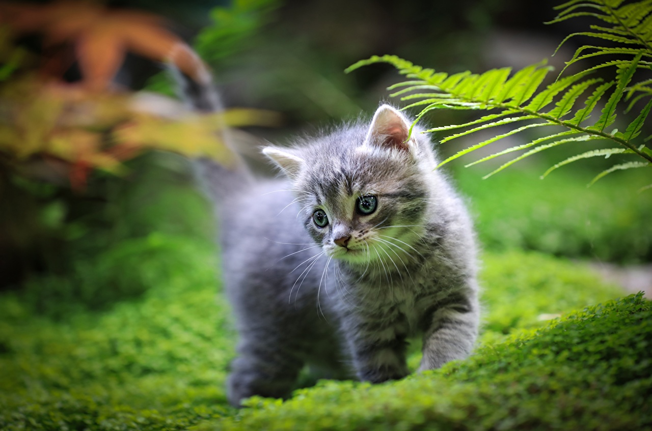 Gato Hierba Gatitos Bokeh animales, un animal, gatos, fondo borroso Animalia