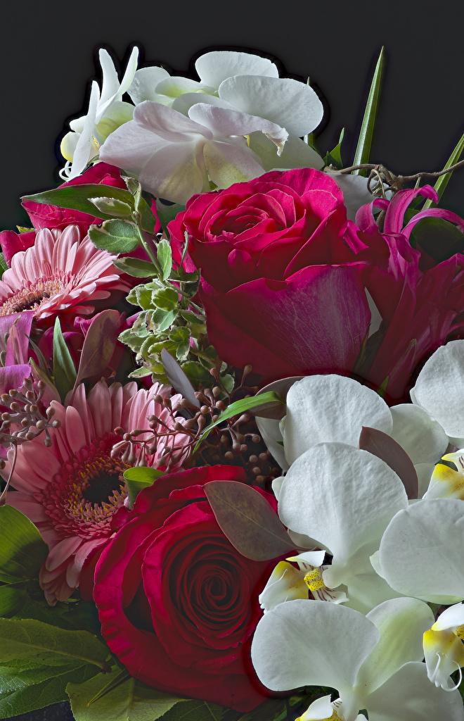 Desktop Wallpapers Roses Orchid gerbera flower  for Mobile phone rose orchids Gerberas Flowers
