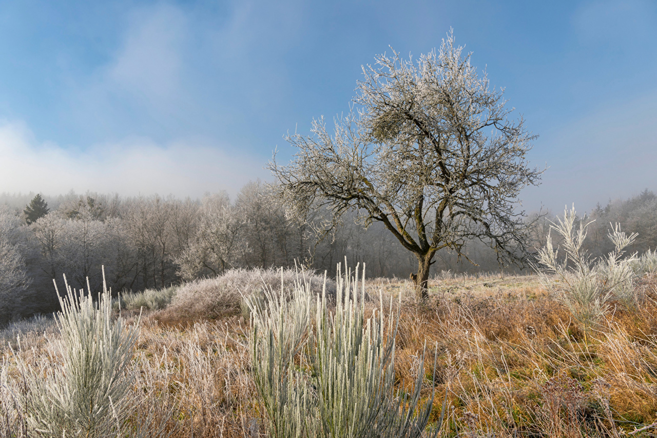 Picture Germany Frost Nature Grass Trees