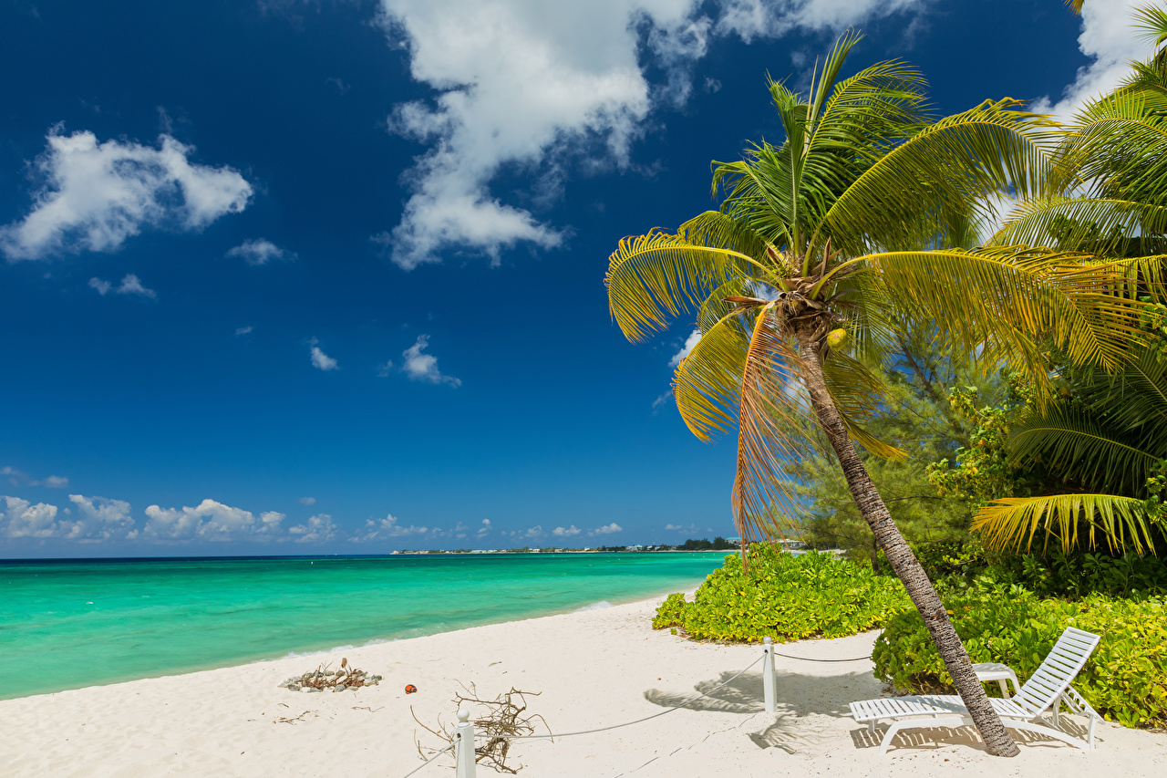 Wallpaper Grand Cayman Nature Sky Palms Tropics Coast Sunlounger Clouds palm trees
