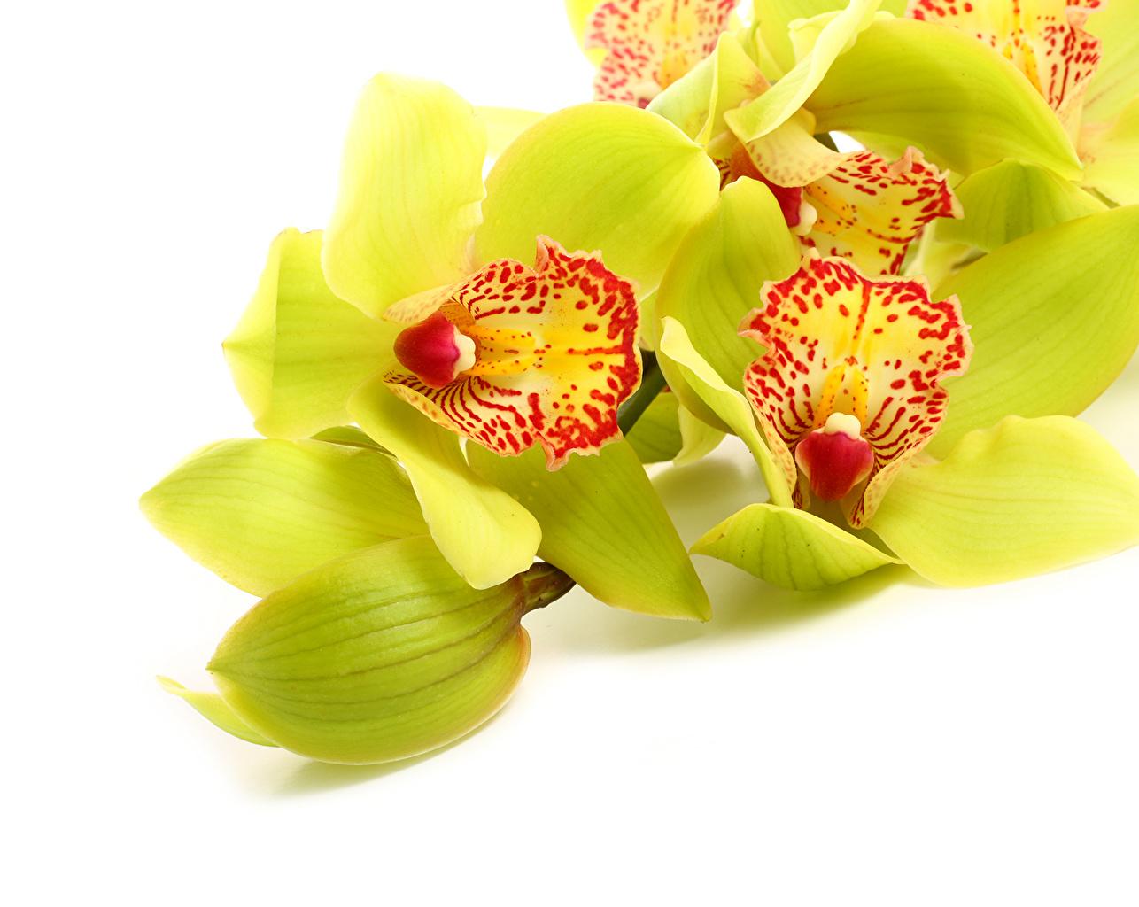 Fonds D Ecran Orchidees En Gros Plan Jaune Fleurs