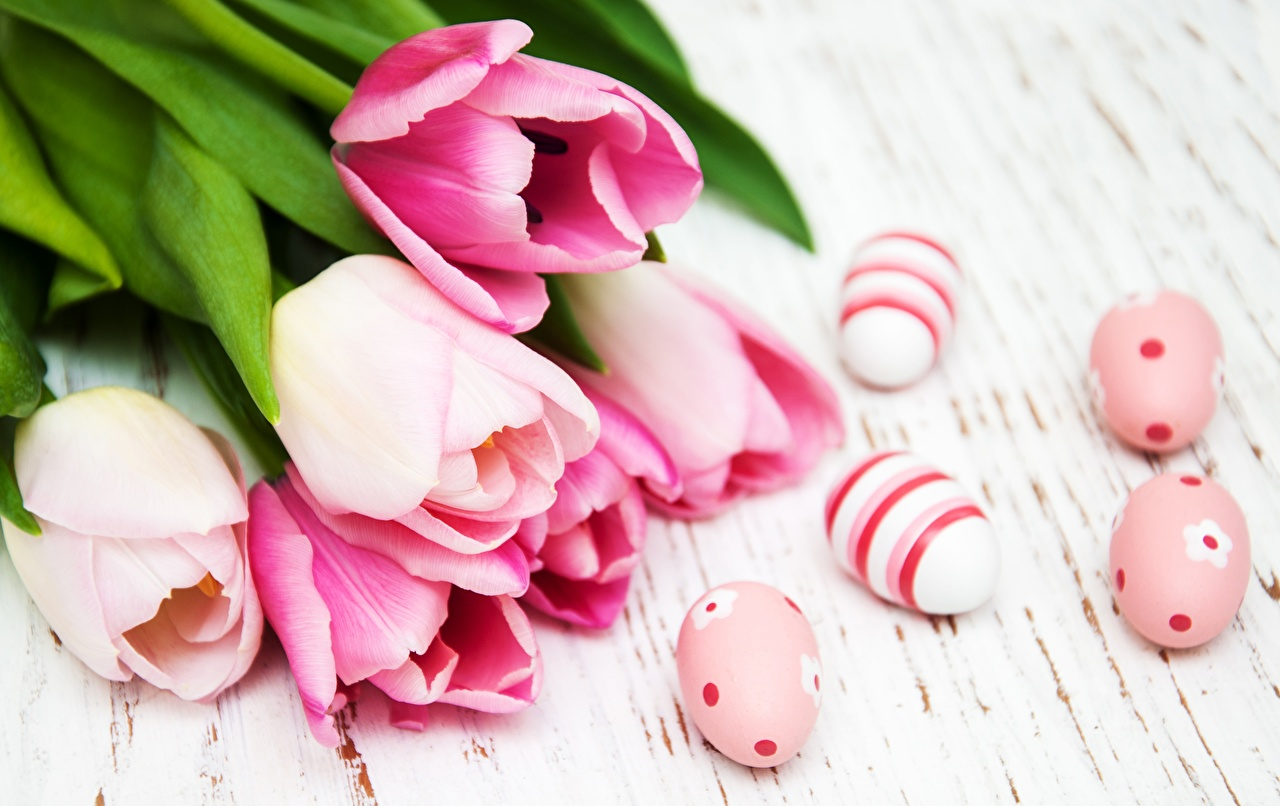 Pictures Easter Eggs Tulips Pink color Flowers egg tulip flower