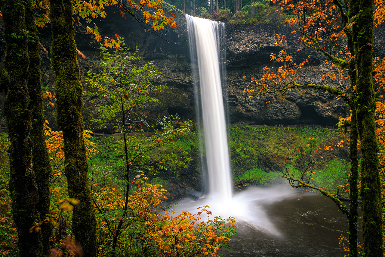 Pictures USA Silver Falls State Park Oregon Crag Nature Autumn Waterfalls Parks Trunk tree Moss Rock Cliff