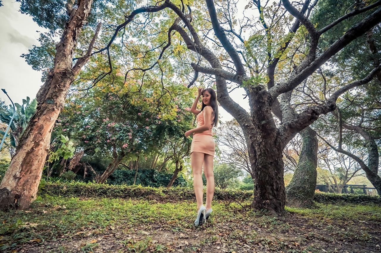 Bilder Mädchens Bein asiatisches Bäume Kleid junge frau junge Frauen Asiaten Asiatische