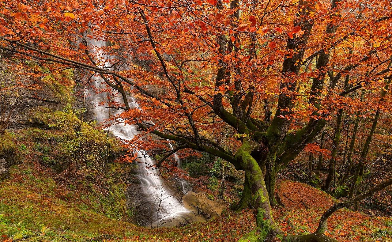 、スペイン、滝、秋、公園、Uguna Waterfall Gorbea Natural Park Bizkaia Basque Country、木、枝、自然、