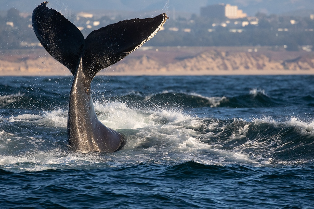 Pictures Whale Tail Waves animal Animals