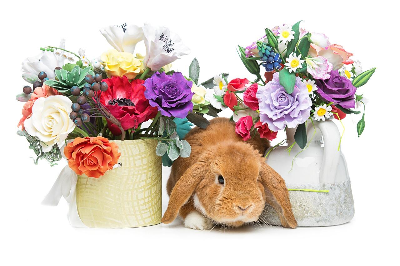 Bilder von Ostern Kaninchen Sträuße Blumensträuße