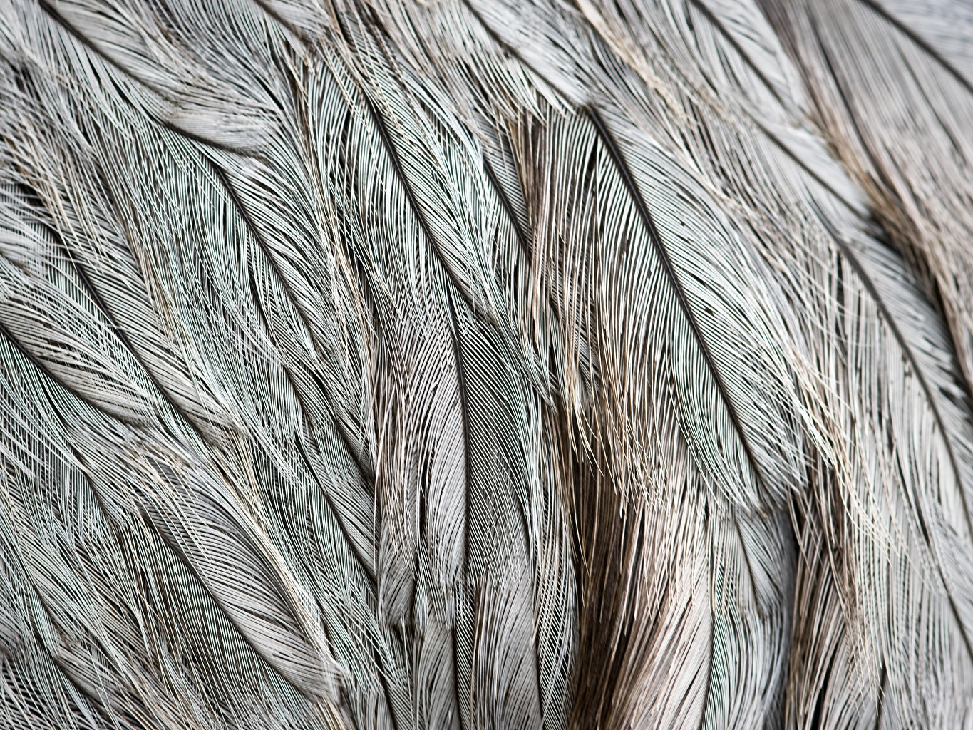 Desktop Wallpapers Texture Feathers Closeup