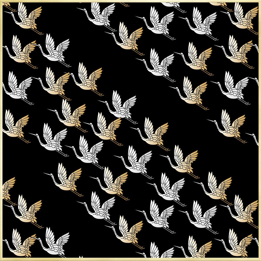 Photo Birds stork Texture Japanese style Black background bird Storks