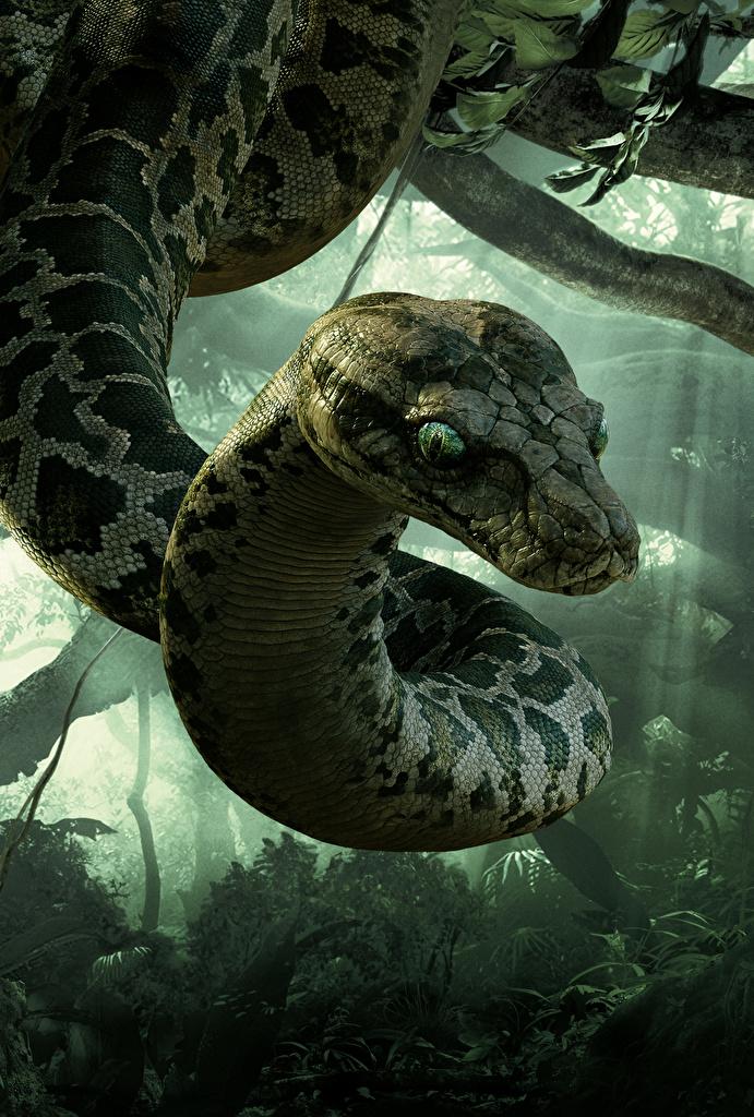 Fondos de Pantalla Serpientes El libro de la selva 2016