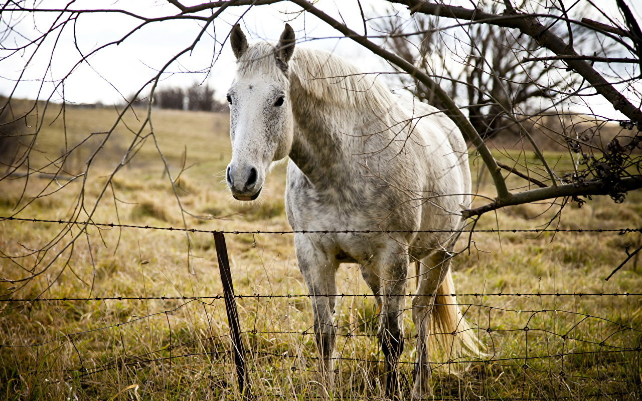 Pictures horse Grass Branches Head Staring Animals Horses Glance animal