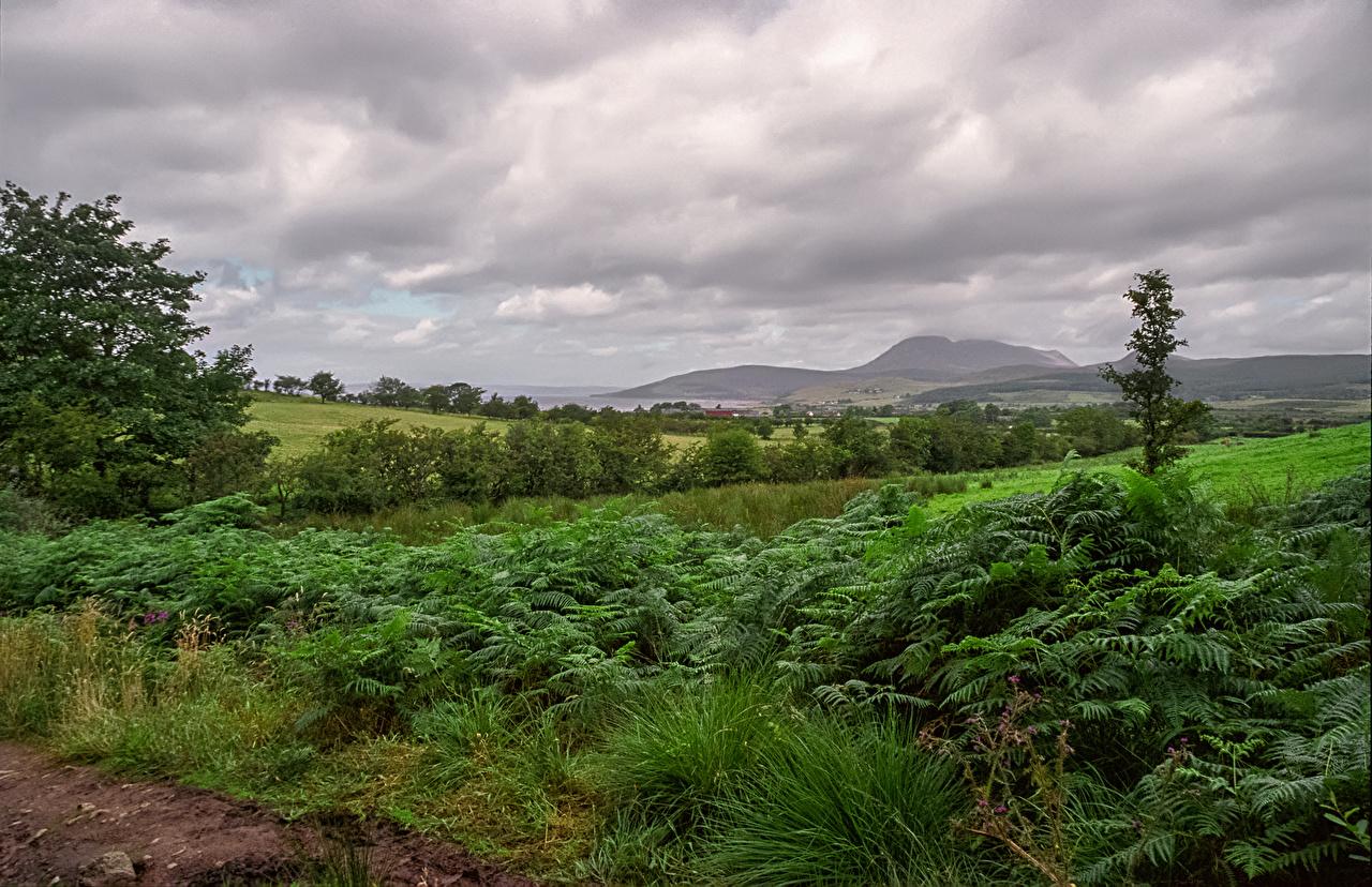 Picture Scotland Nature Hill Fields Shrubs Bush